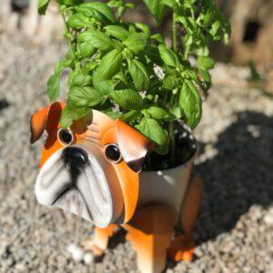 Bulldog Planter