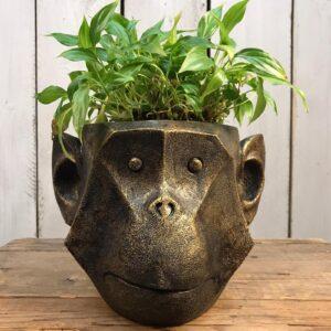monkey planter
